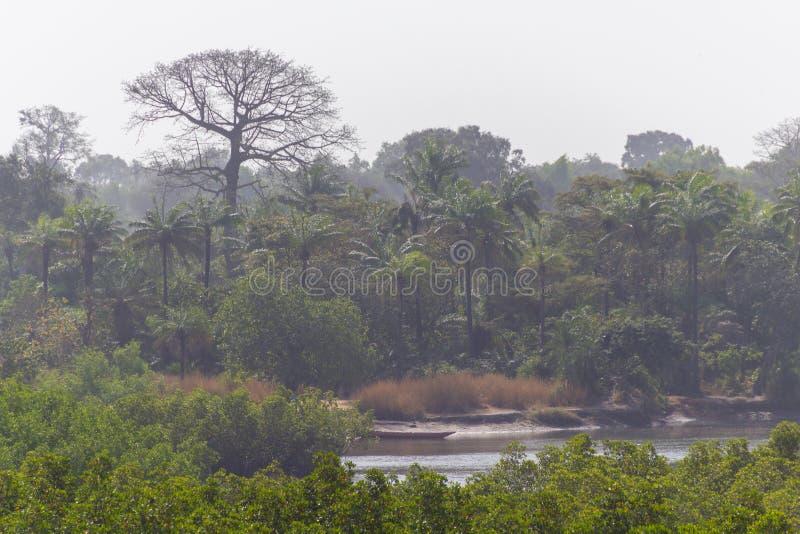 Makasutu-staatlicher Wald in Gambia stockfotos
