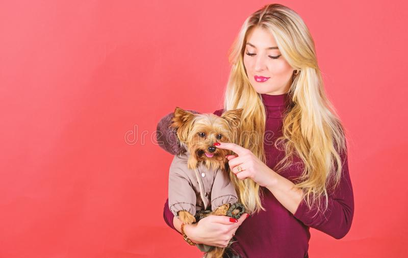 Make sure dog feel comfortable in clothes. Apparel and accessories. Dressing dog for cold weather. Which dog breeds royalty free stock photos
