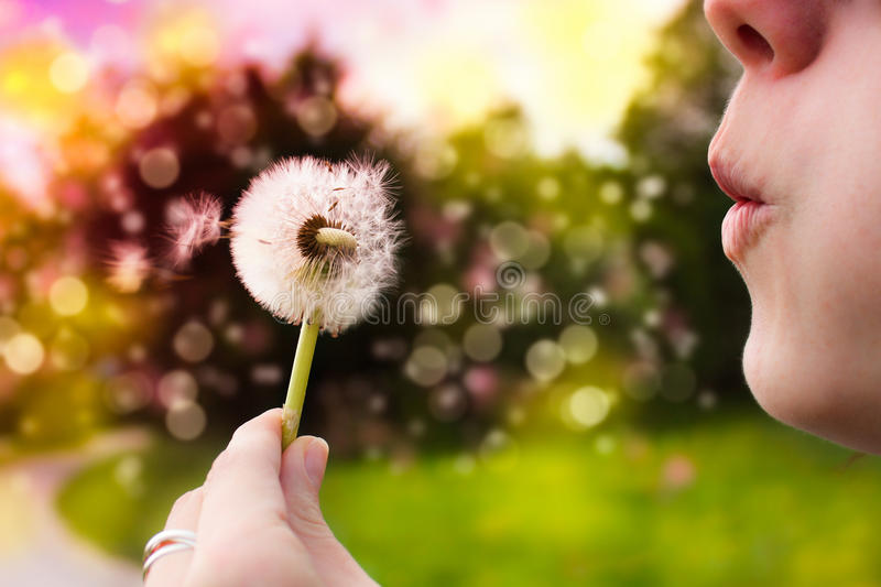 Download Make a wish stock photo. Image of woman, floral, hoping - 19304990