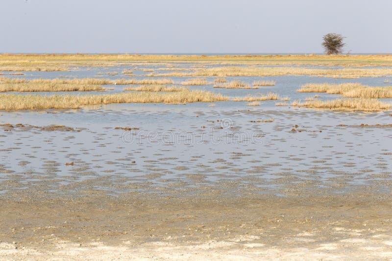 Makgadikgadi filtra il paesaggio espansivo del parco nazionale immagine stock libera da diritti