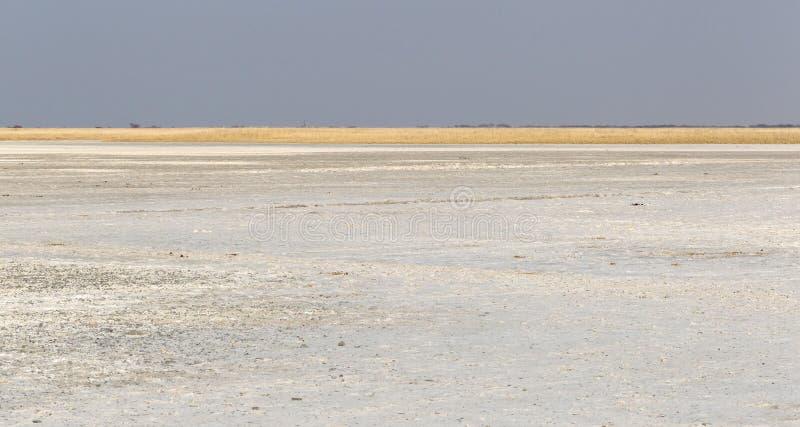 Makgadikgadi niecek parka narodowego ekspansywny krajobraz zdjęcie royalty free