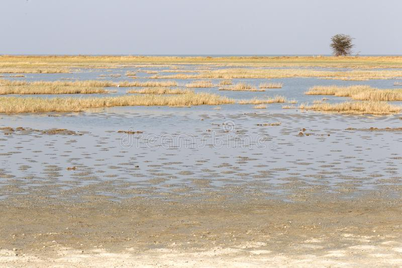 Makgadikgadi niecek parka narodowego ekspansywny krajobraz obraz royalty free