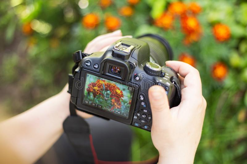 Making flowers photos and video. Camera on hands closeup. Closeup photo camera on hands making photos of flowers in garden royalty free stock photos