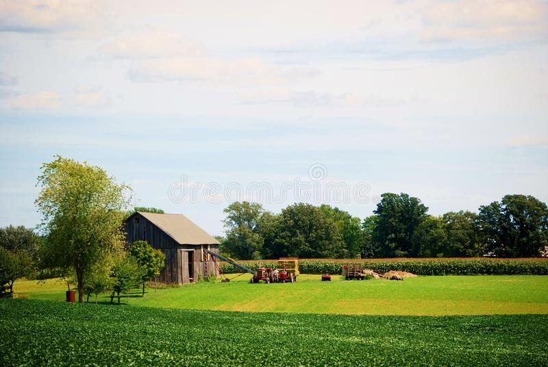 Making hay stock photo