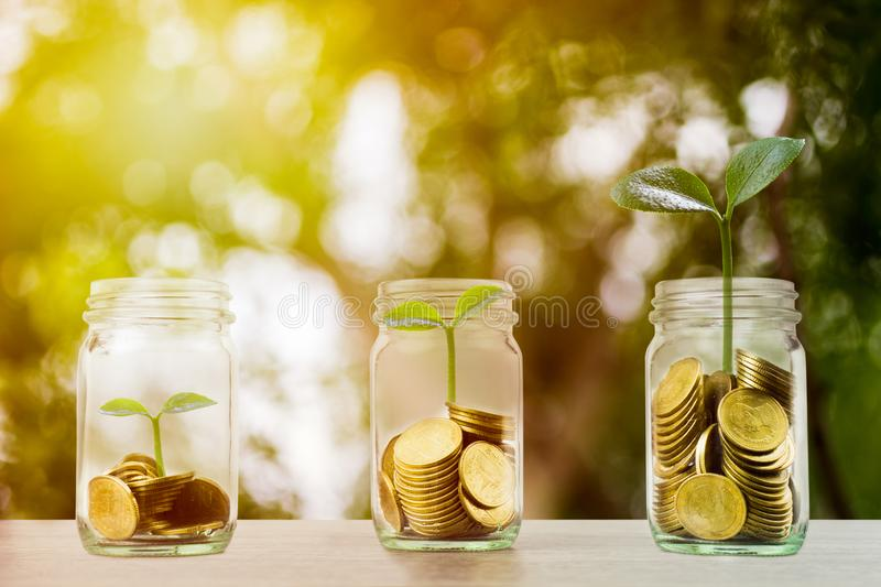 Making money and money investment concept. A stack of coins in glass jar with growing plant and sun light. Depicts long-term royalty free stock photography