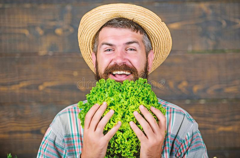 Making nutritional choice. seasonal vitamin food. Useful vegetable. harvest festival. organic and natural food. happy. Bearded mature farmer. man chef with royalty free stock photos