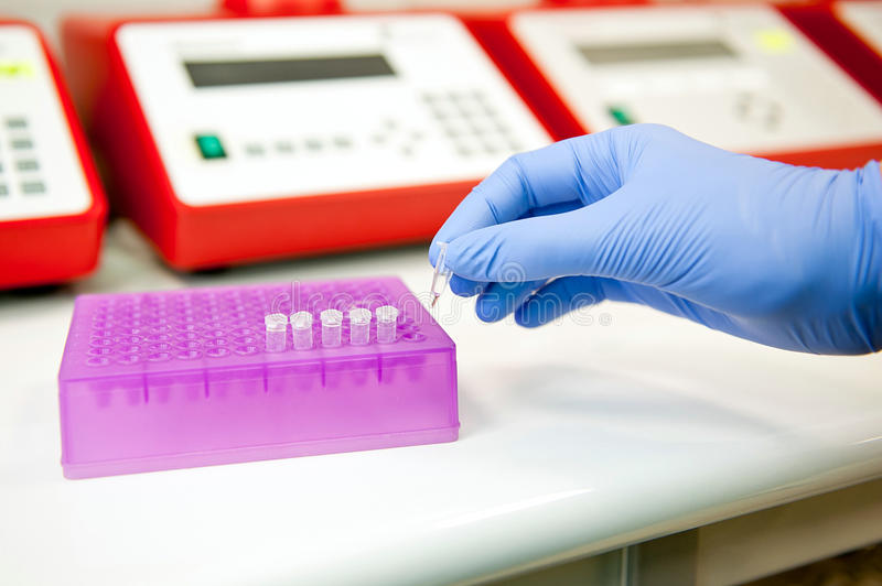 Making pcr reaction. Hand preparing polymerase chain reaction test tubes for analysis. Genetics laboratory royalty free stock photo