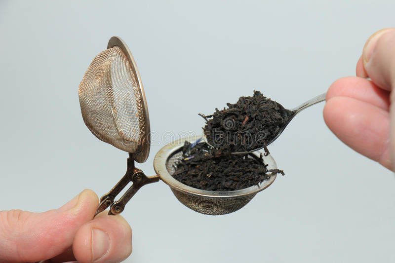 Making tea with infuser. Metal tea infuser with dried tea leaves stock image