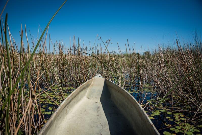 Makoro canoes delta Botswana d'Okavango images libres de droits
