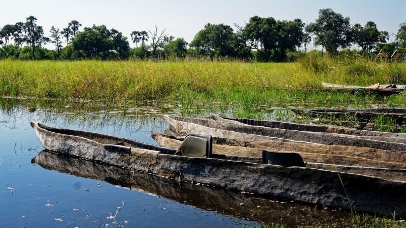 Makoro dugout canoes, Okavango Delta, Botswana. Makoro dugout canoes reflected in the still swamp waters, Okavango Delta, Botswana, Africa royalty free stock photography