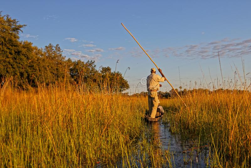 Makoro-poler im Okavango-Delta stockfotografie