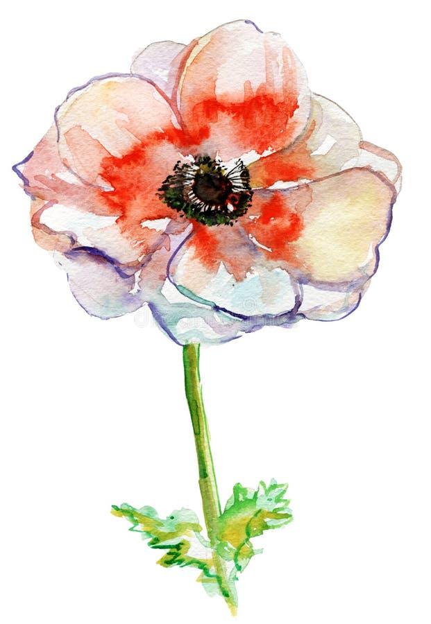 Makowi kwiaty, akwareli ilustracja royalty ilustracja
