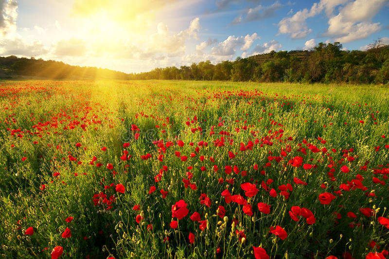 Makowy łąka krajobraz fotografia royalty free