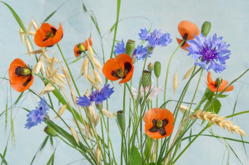 Makowy bukiet z wildflowers Czerwoni maczki, chabrowi, owies, pszeniczny ucho na błękitnym nieociosanym wioski tle Kraj lub wieś obraz royalty free