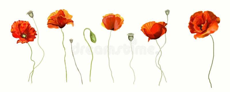 Makowy kwiat ilustracja wektor