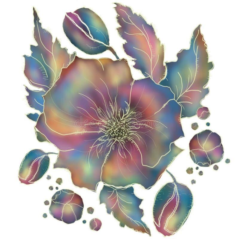 Makowy kwiat fiołkowi i błękit odcienie na białym tle royalty ilustracja