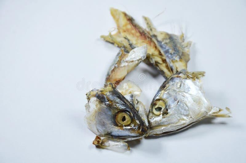 Makreel hoofdblad over kat het voeden op witte achtergrond stock afbeeldingen