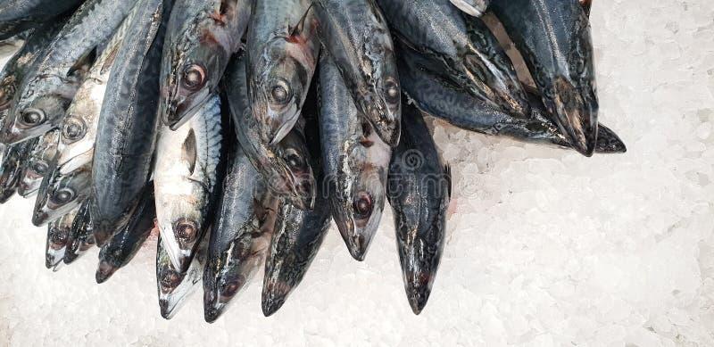 Makreel op ijs in de supermarkt Dode ruwe bevroren Japanse fis royalty-vrije stock fotografie