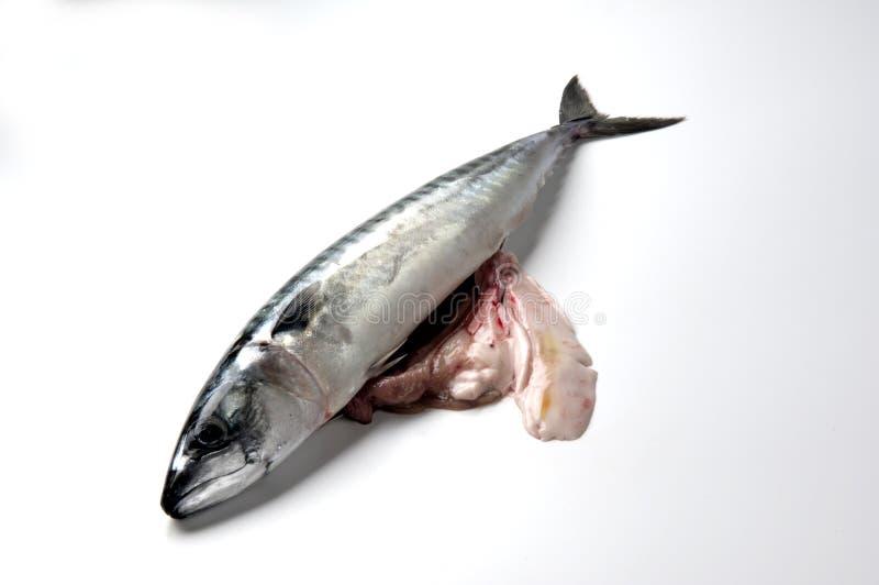 Makreelingewanden royalty-vrije stock foto