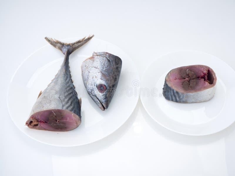 Makreelvissen ( saba fish) op witte achtergrond stock afbeeldingen