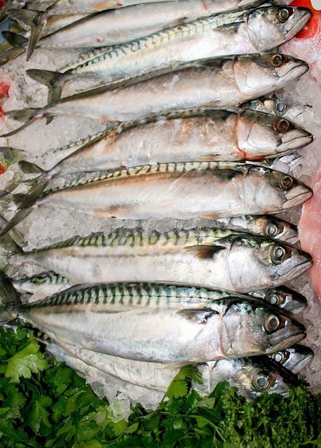 makrela ryb zdjęcia stock