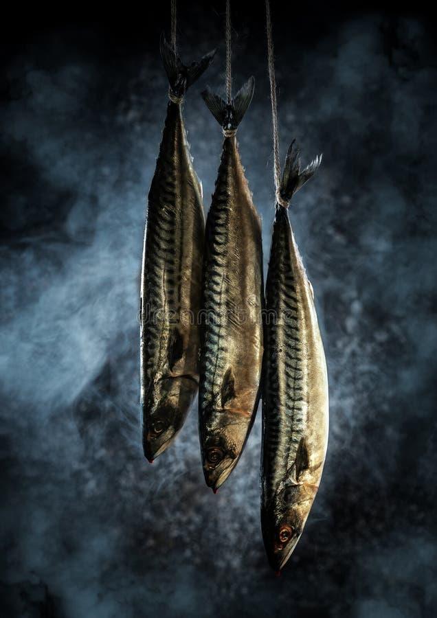 Makrela w wędzarni Świeża ryba w dymu zdjęcia royalty free