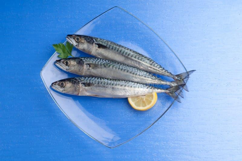 Makrele mit Zitrone stockfotos