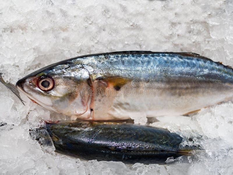 Makreli ryba, Świeża ryba jest w kramu fotografia stock