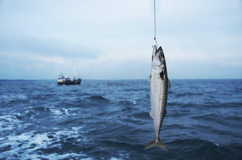 Makreli ryba obrazy stock