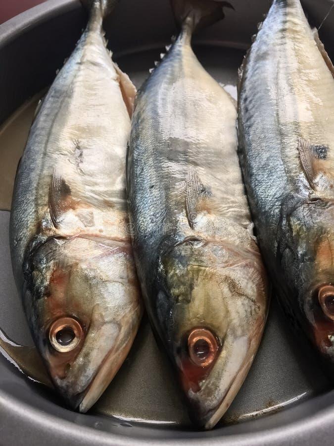 Makreli ryba na naczyniu obraz royalty free