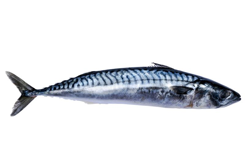 Makreli ryba Odizolowywająca na Białym tle mrożona ryba zamrażający przy obrazy stock