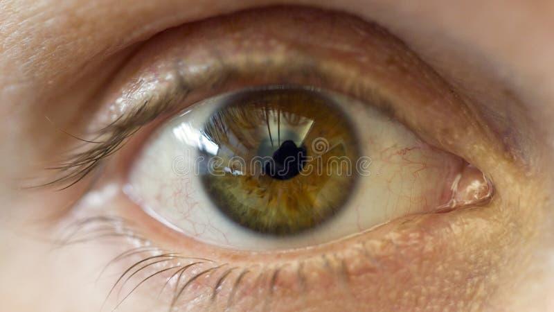 Makro-Auge stockfoto