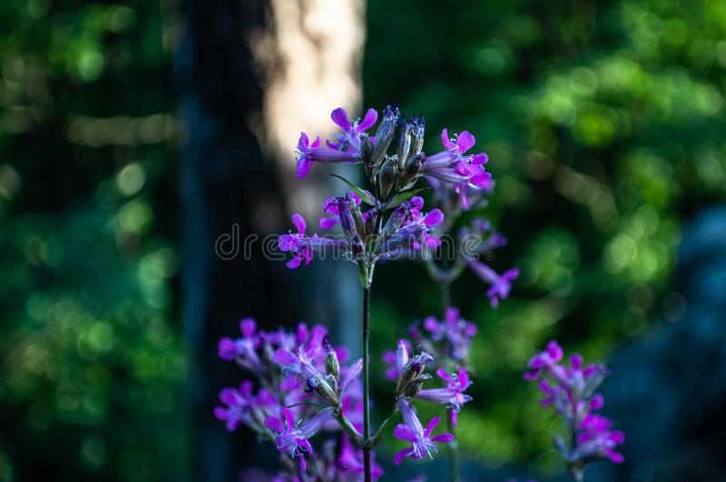 Makro av blommor arkivbild