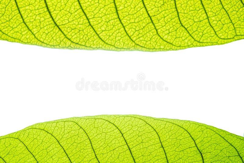 Makro av den gröna tjänstledighetbildramen royaltyfri bild