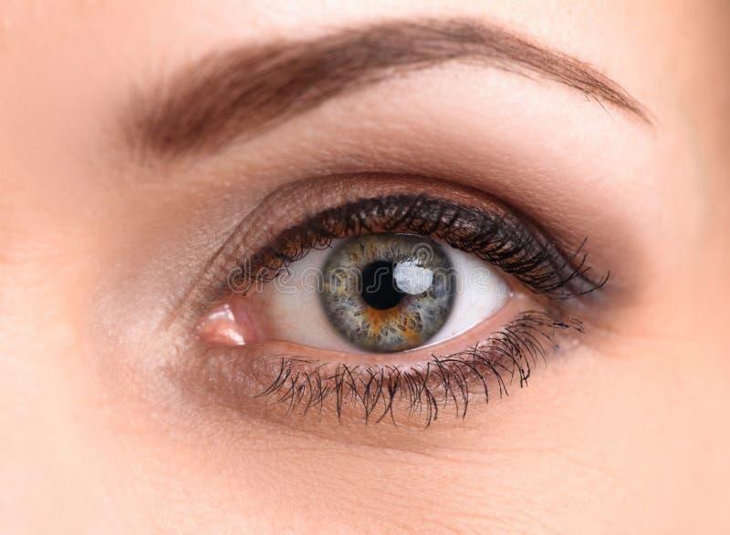 Makro av det kvinnliga ögat arkivfoto