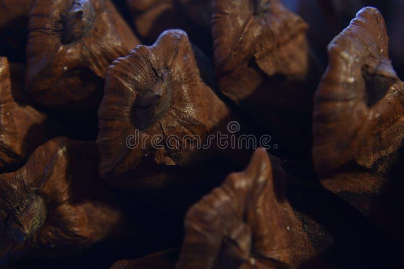 Makro av en brun pinecone royaltyfria bilder