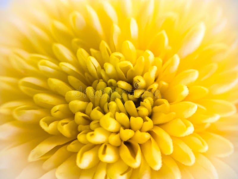 Makro av en gul blomma royaltyfri foto