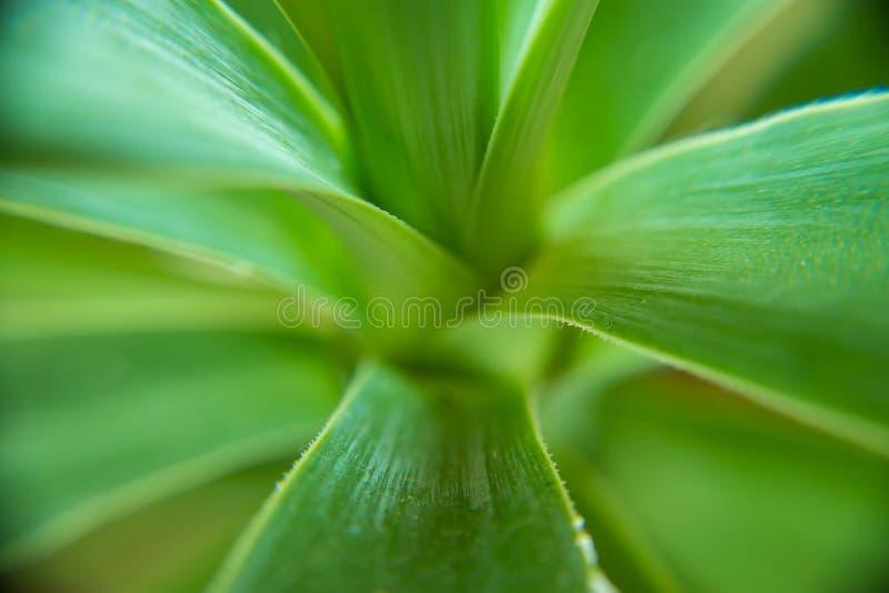 Makro av en suckulent växt arkivfoto