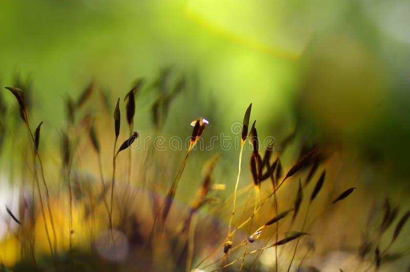 Makro av grön moss royaltyfria bilder