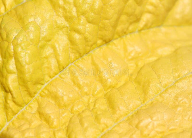 Makro av leafen. arkivbilder