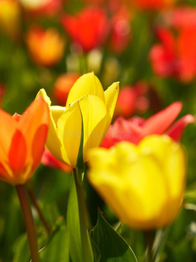 Makro av ljusa blommor royaltyfri foto