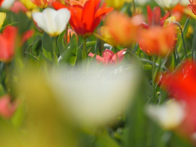 Makro av ljusa blommor arkivfoto