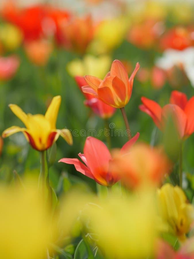 Makro av ljusa blommor arkivfoton