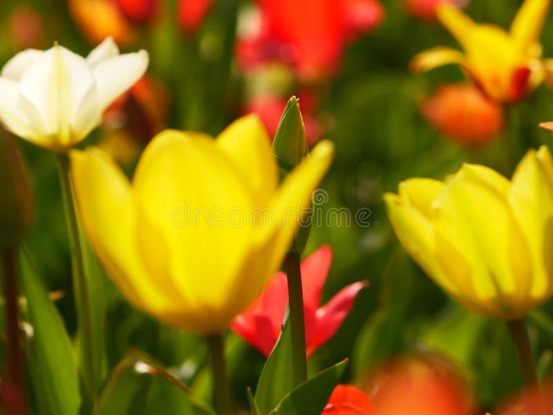 Makro av ljusa blommor arkivbilder