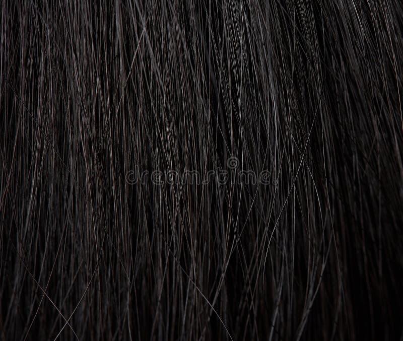 Makro av mänskligt hår royaltyfri foto