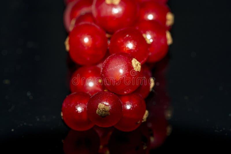 Makro av röda vinbär royaltyfri fotografi