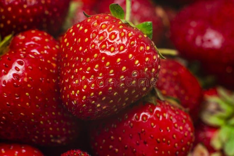 Makro- czerwoni słodcy strawberrys z bliska szef kuchni poj?cia karmowa ?wie?a kuchni oleju oliwka nad dolewania restauraci sa?at obraz royalty free