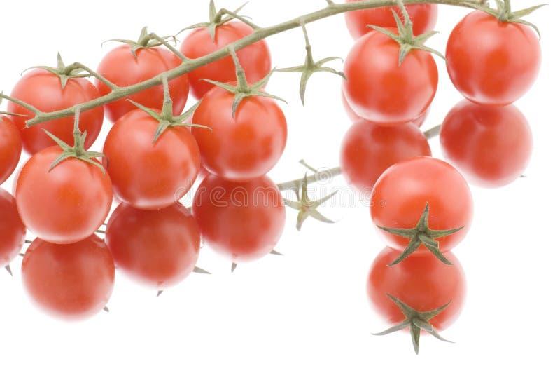 makro- czerwony pomidorowy biel zdjęcie stock