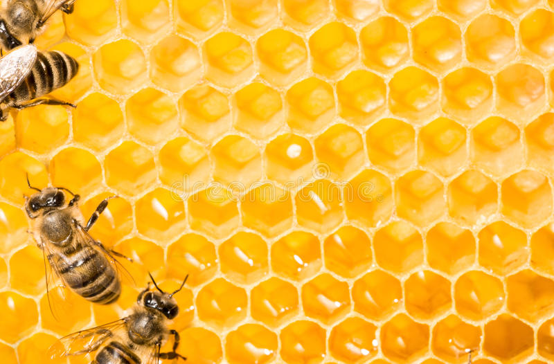 Makro der Arbeitsbiene auf honeycells. lizenzfreies stockbild