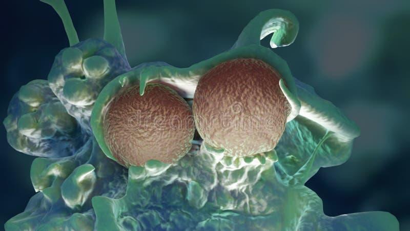 Makro der bakteriellen Infektion vektor abbildung